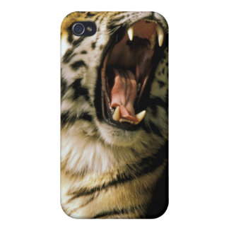 USA, Michigan, Detroit. Detroit Zoo, tiger 2 iPhone 4 Case