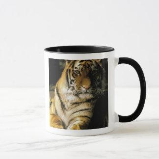 USA, Michigan, Detroit. Detroit Zoo, tiger 3 Mug