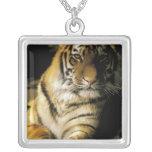 USA, Michigan, Detroit. Detroit Zoo, tiger 3 Square Pendant Necklace