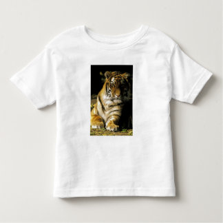 USA, Michigan, Detroit. Detroit Zoo, tiger 3 Tee Shirt