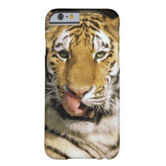 USA, Michigan, Detroit. Detroit Zoo, tiger Barely There iPhone 6 Case