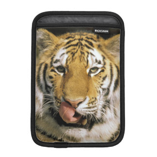 USA, Michigan, Detroit. Detroit Zoo, tiger iPad Mini Sleeve