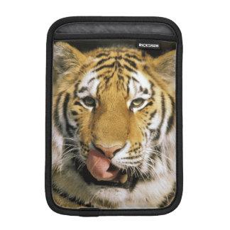 USA, Michigan, Detroit. Detroit Zoo, tiger iPad Mini Sleeve