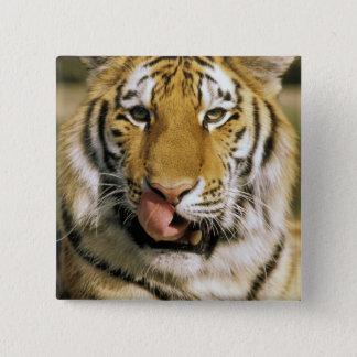 USA, Michigan, Detroit. Detroit Zoo, tiger Pinback Button