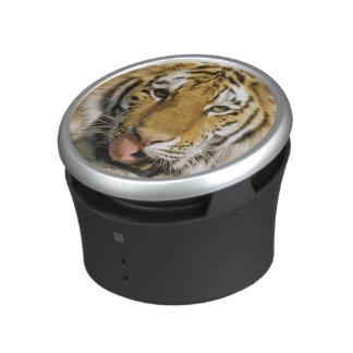 USA, Michigan, Detroit. Detroit Zoo, tiger Speaker