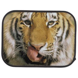 USA, Michigan, Detroit. Detroit Zoo, tiger Car Mat