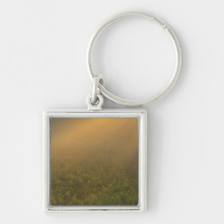 USA, Michigan, Meadow of goldenrod plants Keychain