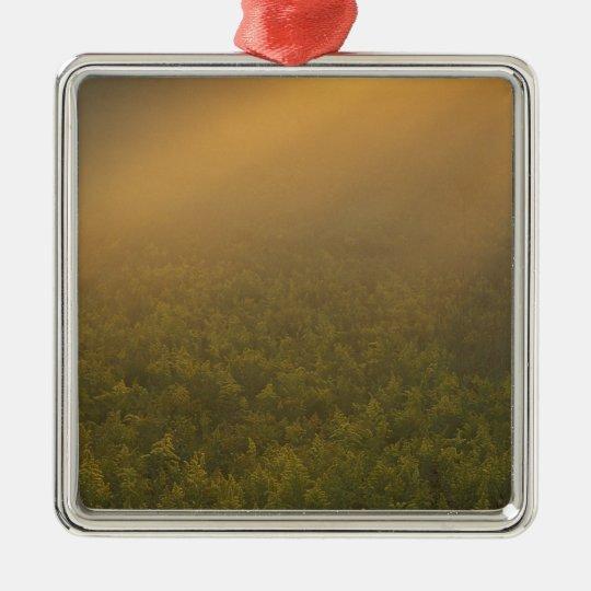 USA, Michigan, Meadow of goldenrod plants Metal Ornament