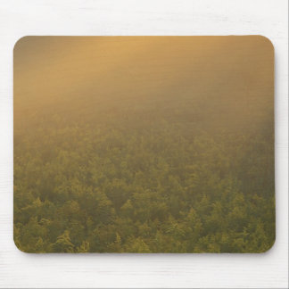 USA, Michigan, Meadow of goldenrod plants Mouse Pad