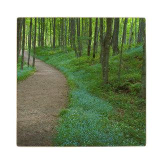 USA, Michigan. Miner's Falls Trail Wood Coaster