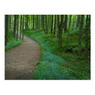 USA, Michigan. Miner's Falls Trail Postcard