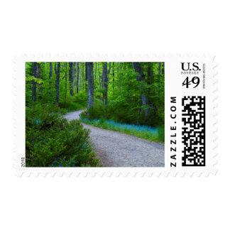 USA, Michigan. Path Thru The Woods Postage Stamp