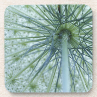 USA, Michigan. Queen-Anne's Lace viewed from Drink Coaster