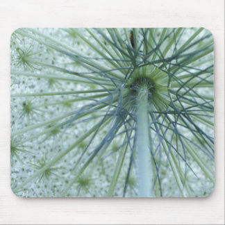 USA, Michigan. Queen-Anne's Lace viewed from Mouse Pad