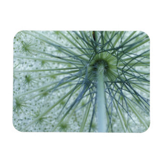 USA, Michigan. Queen-Anne's Lace viewed from Rectangular Photo Magnet