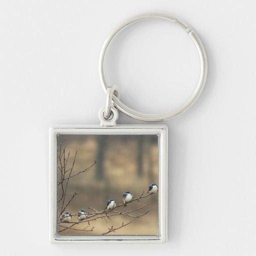 USA, Michigan, Shiawassee County. Tree Keychains