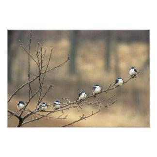 USA, Michigan, Shiawassee County. Tree Photograph