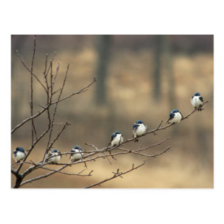 USA, Michigan, Shiawassee County. Tree Postcard