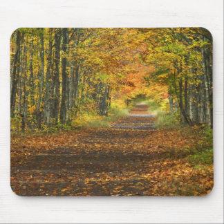 USA, Michigan, Upper Peninsula. Roadway into Mouse Pad