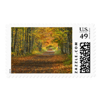 USA, Michigan, Upper Peninsula. Roadway into Postage