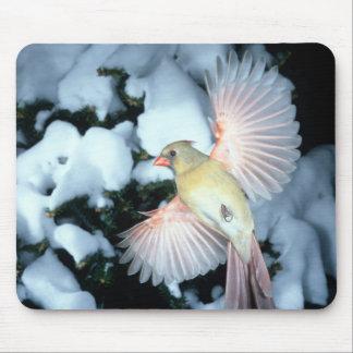 USA, Minnesota, Mendota Heights, Female Cardinal Mouse Pad
