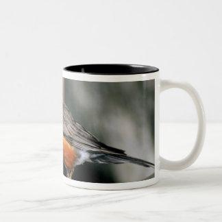 USA, Minnesota, Mendota Heights, male Robin Two-Tone Coffee Mug
