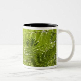 USA, MInnesota, North Shore Lake Superior, Two-Tone Coffee Mug