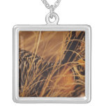 USA, Minnesota, Pembina Trail Preserve. Jewelry