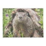 USA, Minnesota, Sandstone, Minnesota Wildlife 15 Tyvek® Card Wallet