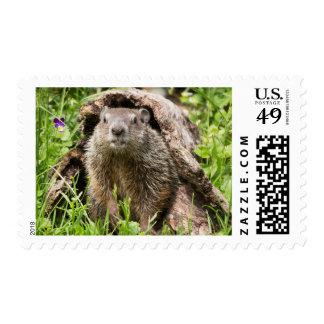 USA, Minnesota, Sandstone, Minnesota Wildlife 15 Postage Stamps