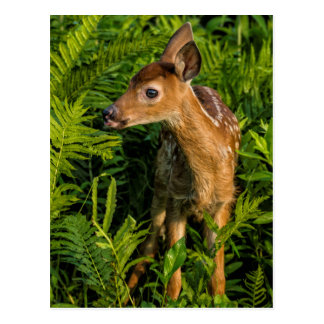 USA, Minnesota, Sandstone, Minnesota Wildlife 16 Postcard
