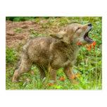 USA, Minnesota, Sandstone, Minnesota Wildlife 17 Postcard