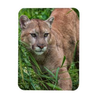 USA, Minnesota, Sandstone, Minnesota Wildlife 18 Rectangular Photo Magnet