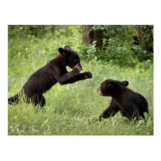 USA, Minnesota, Sandstone, Minnesota Wildlife 22 Postcard