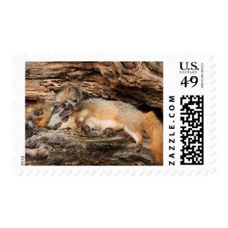USA, Minnesota, Sandstone, Minnesota Wildlife 23 Postage Stamp