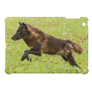 USA, Minnesota, Sandstone, Minnesota Wildlife 24 iPad Mini Cover