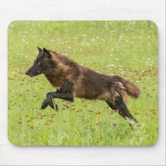USA, Minnesota, Sandstone, Minnesota Wildlife 24 Mouse Pad