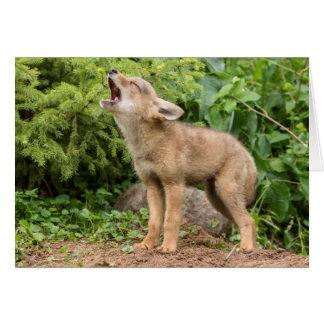 USA, Minnesota, Sandstone, Minnesota Wildlife 2 Card