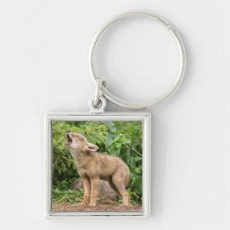 USA, Minnesota, Sandstone, Minnesota Wildlife 2 Keychain