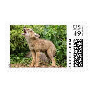 USA, Minnesota, Sandstone, Minnesota Wildlife 2 Stamps