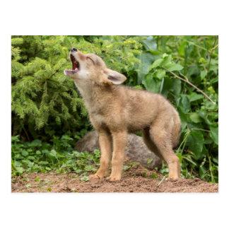 USA, Minnesota, Sandstone, Minnesota Wildlife 2 Postcard