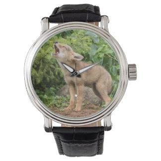 USA, Minnesota, Sandstone, Minnesota Wildlife 2 Watch