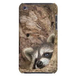 USA, Minnesota, Sandstone, Minnesota Wildlife 3 iPod Case-Mate Case