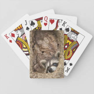 USA, Minnesota, Sandstone, Minnesota Wildlife 3 Playing Cards