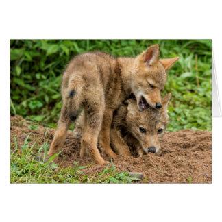 USA, Minnesota, Sandstone, Minnesota Wildlife 4 Card