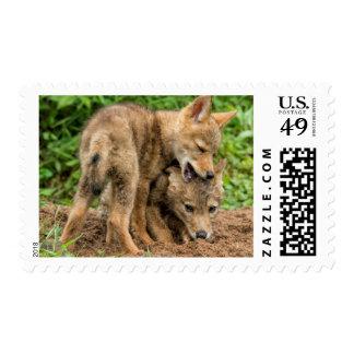 USA, Minnesota, Sandstone, Minnesota Wildlife 4 Postage