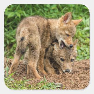 USA, Minnesota, Sandstone, Minnesota Wildlife 4 Square Sticker