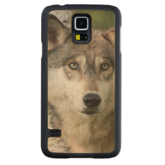 USA, Minnesota, Sandstone, Minnesota Wildlife 5 Carved® Maple Galaxy S5 Case