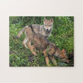 USA, Minnesota, Sandstone, Minnesota Wildlife 5 Jigsaw Puzzle