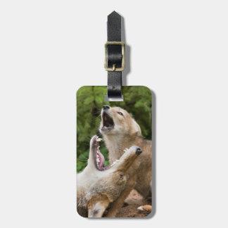 USA, Minnesota, Sandstone, Minnesota Wildlife 6 Bag Tag